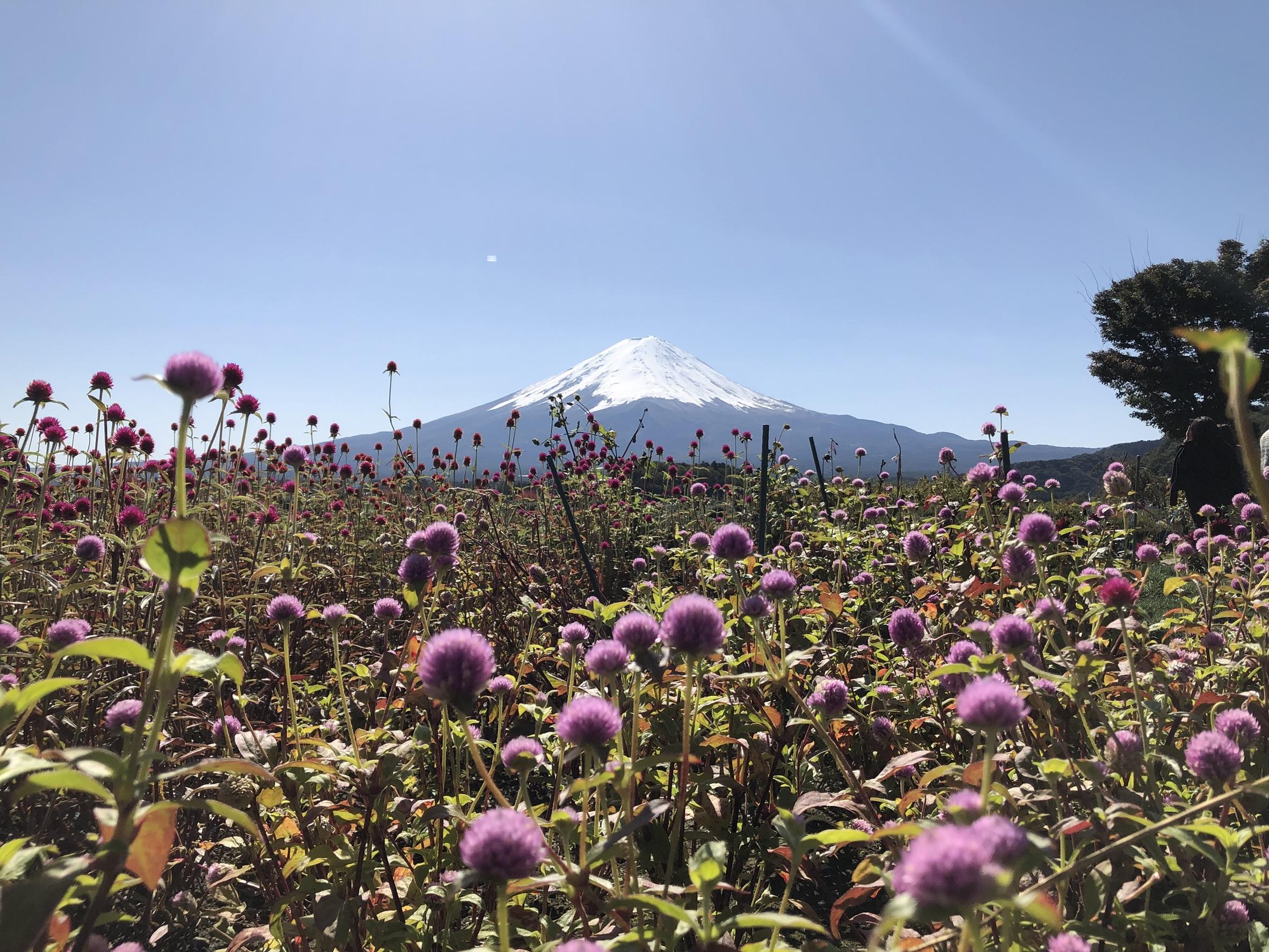 Mt Fuji Day Tour with Kawaguchiko Lake