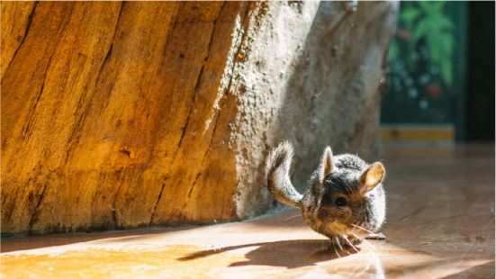潯龍河甜甜灣室內動物城