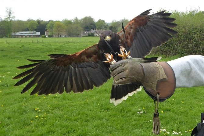 Bath City Tour & Fly a Hawk Experience - Day Trip from Bristol