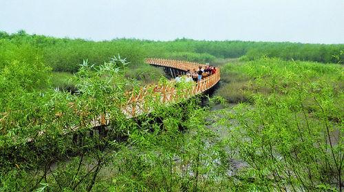 上海淀山湖森林公园_上海东平国家森林公园+明珠湖公园一日游【特色纯玩踏青赏花