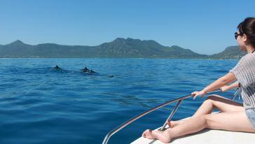 胜自由行 海豚
