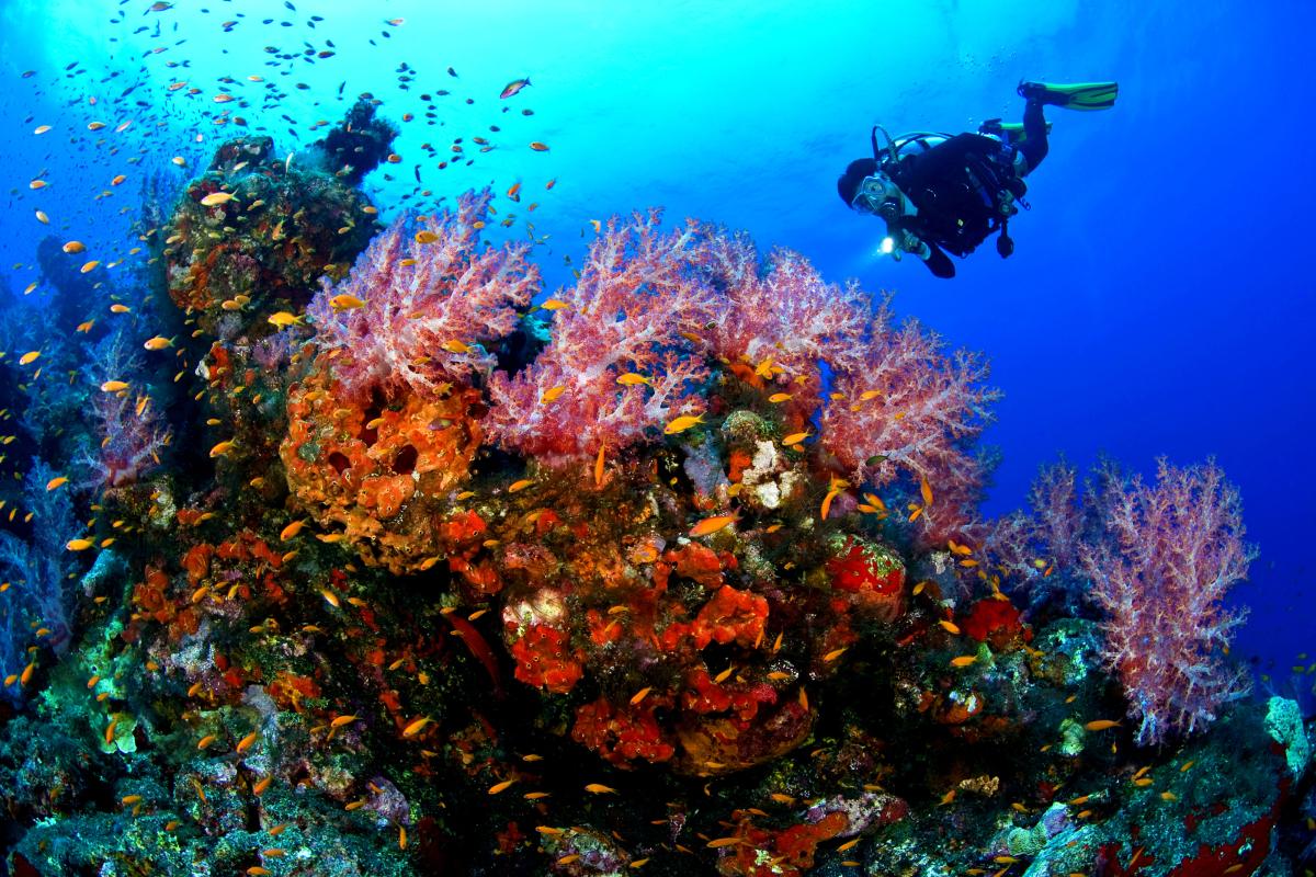 沙巴哥打京那巴魯美人魚島潜水+Kawa 紅樹林一日遊(五星海鮮餐+表演+騎馬 ATV+市區用車)