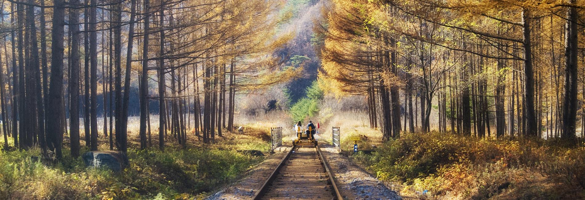 【일일투어】에델바이스, 아침 고요 수목원, 강촌 레일파크 (서울출발)