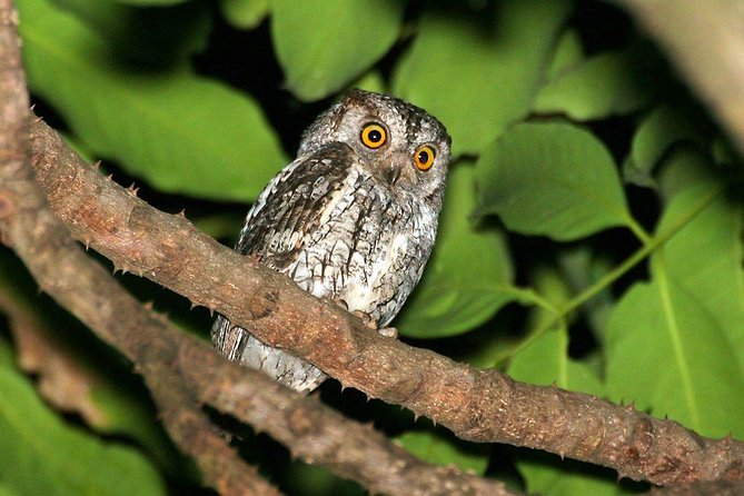 Full-Day Bird and Owl Watching Tour from Accra