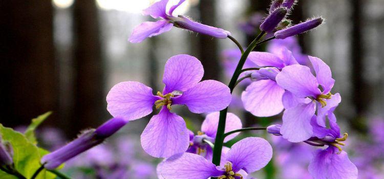 紫海芳庭熏衣草莊園