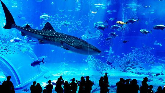 曼谷必去暹羅海洋世界優惠門票