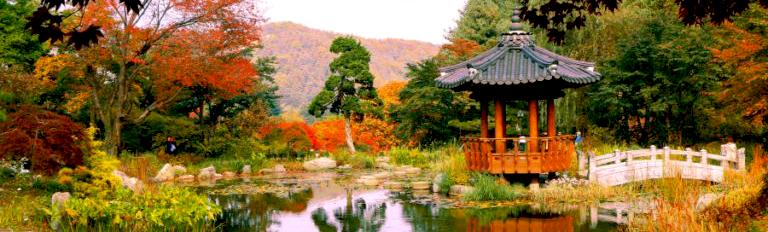 【일일투어】 홍천 알파카 월드, 남이섬, 아침 고요 수목원