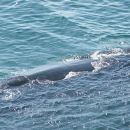 Full Day Private Shore Whale Watching Penguins Wine Tasting Tour from Cape Town