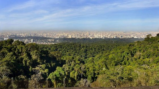 Private 4-hour Ecotour to Cantareira or Jaraguá Forest Reserve