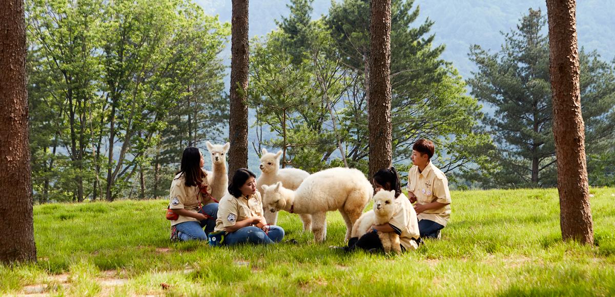 【草泥馬來了】親親草泥馬牧場、首爾近郊景點、夏季水蜜桃果園一日遊