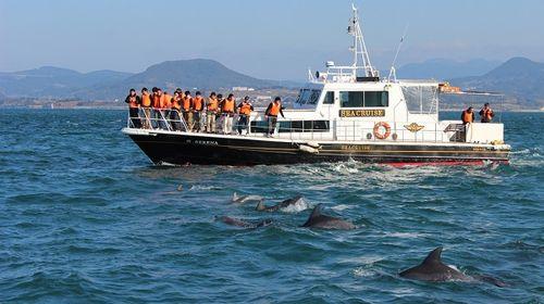 「天草海豚觀覽船」的圖片搜尋結果