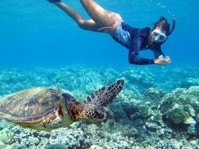 와이키키 거북이 스노클링 포함 해양 6종 투어