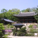 Seoul City Half-day Walking Tour (Changdeokgung Palace & Insa-dong & Gyeongbokgung Palace & Sejong Center)