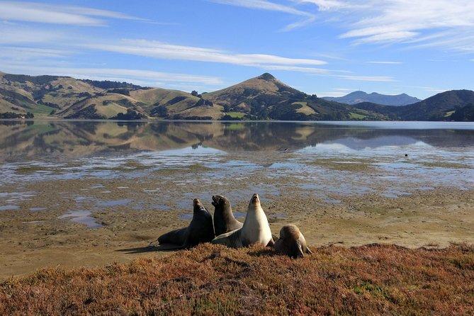 Dunedin City, Wildlife and Scenery Tour