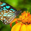 Kuala Lumpur Nature Tour: Orchid Garden, Butterfly Park and Bird Park