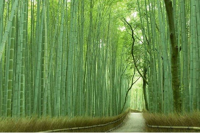 Arashiyama Morning Walking Tour, Bamboo Grove and Tenryuji, Jojakkoji,Togetsukyo