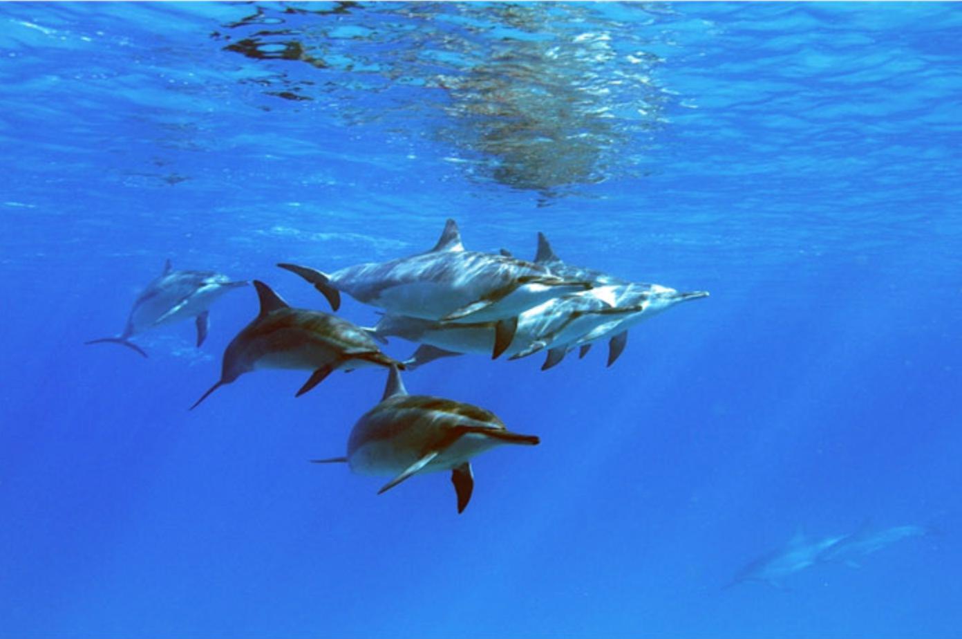 하와이 바다거북이를 볼 수 있는 세일링 및 스노쿨링 투어