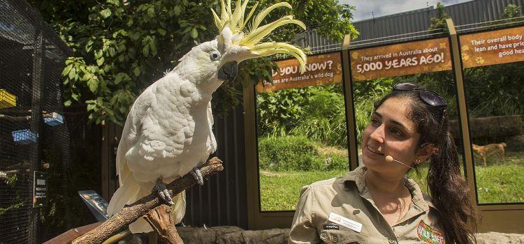漢密爾頓島野生動物園3
