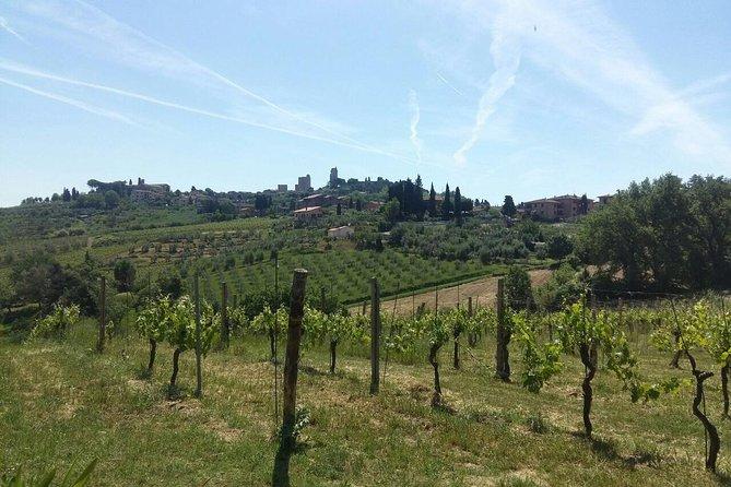 San Gimignano, Monteriggioni, Saffron and Vernaccia Wine from Florence