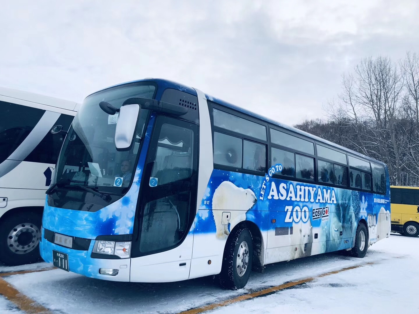 [English-speaking guide] Departing from Sapporo, Hokkaido Asahiyama Zoo + Ningle Terrace + Shirahige Waterfall Day Trip