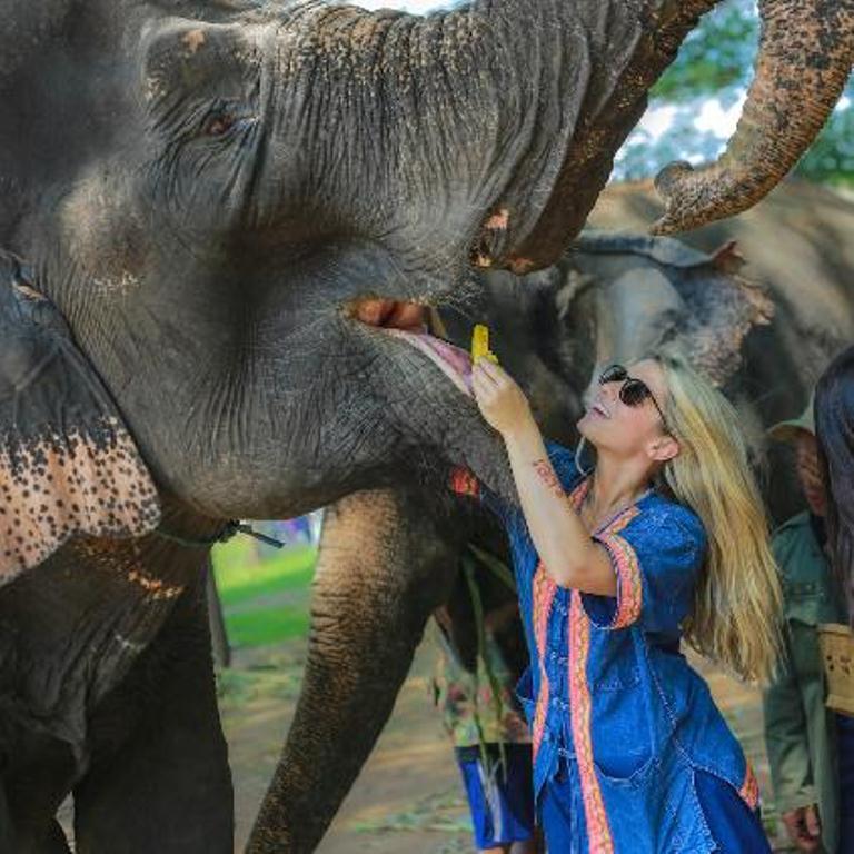 泰國清邁Bobby's大象之家半日遊(象夫體驗半/全天 多套餐可騎大象)