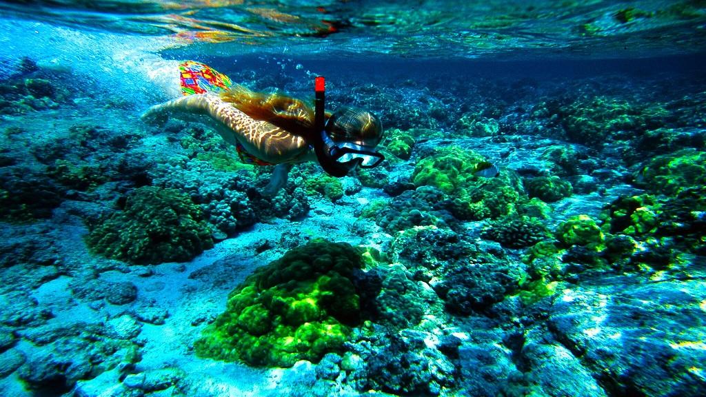 (當季大促 熱銷推薦)夏威夷恐龍灣浮潛體驗(可選快艇拖傘、海上摩托車套餐)