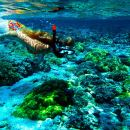 Hawaii Hanauma Bay Snorkeling Experience (Optional Parasailing/ Jet Ski Package)
