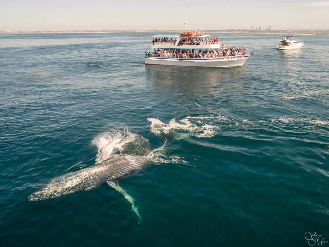 Davey's Locker whale watching cruises