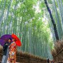 Visit Arashiyama's Bamboo Grove in Kyoto