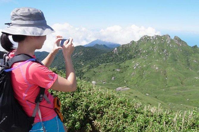 Mt. Miyanoura Hiking Tour in Yakushima Island with Licensed Local Guide