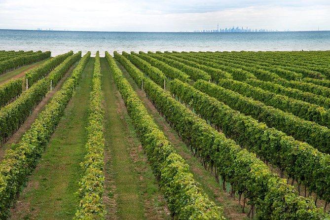 Konzelmann Estate Winery Tour and Tasting in Niagara-on-the-Lake