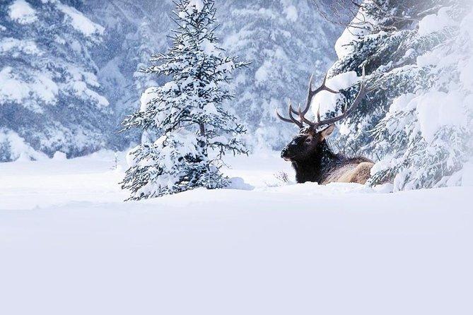 Winter Wildlife Discovery Tour