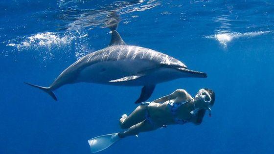 Morning Deluxe Dolphin Swim & Kealakekua Bay Snorkel