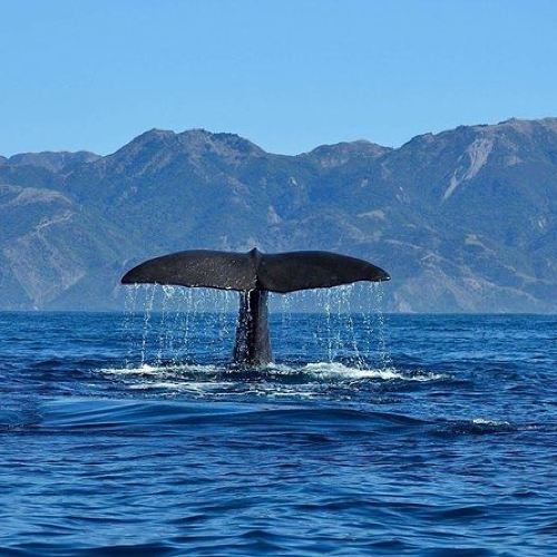Kaikoura Day Tour with Whale Watching