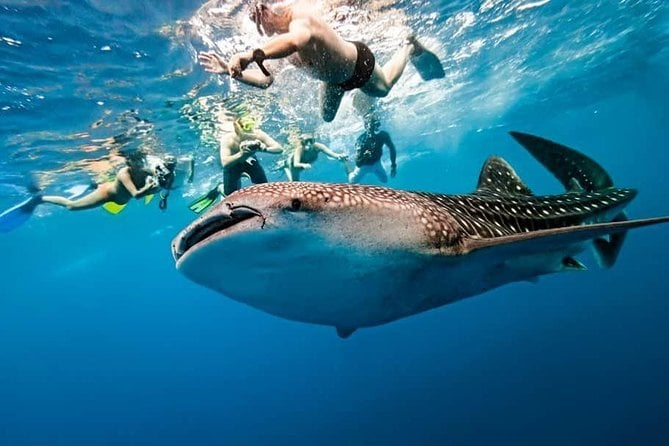 Cebu Whale Shark and Sumilon Island with Tumalog Falls