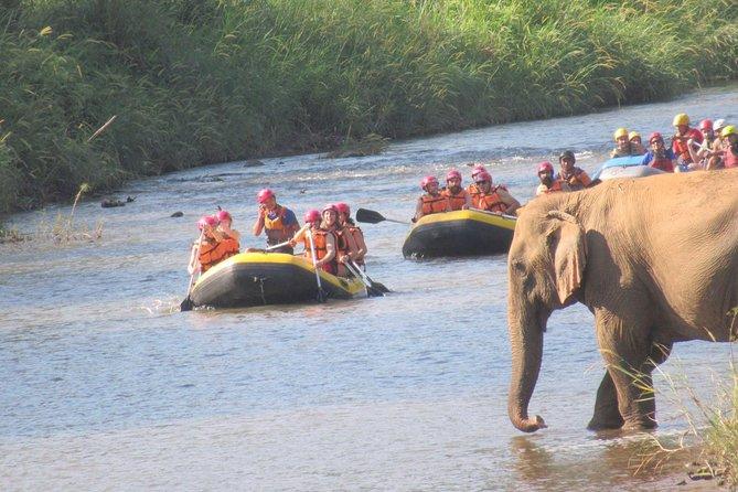 Elephent Care + Mud Spa,Trekking,Rafting @Elephant in Wild Sanctuary, Chiang Mai