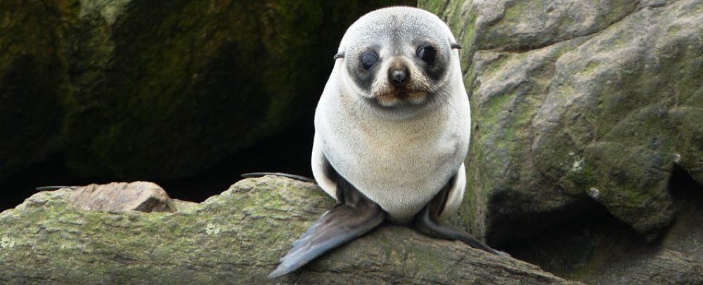 但尼丁半岛野生动物