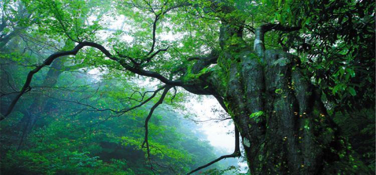 大熊山國家森林公園3