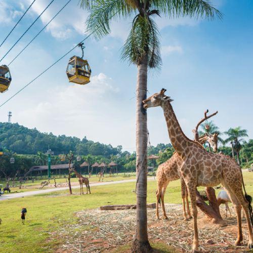 Guangzhou Chimelong Safari Park Ticket