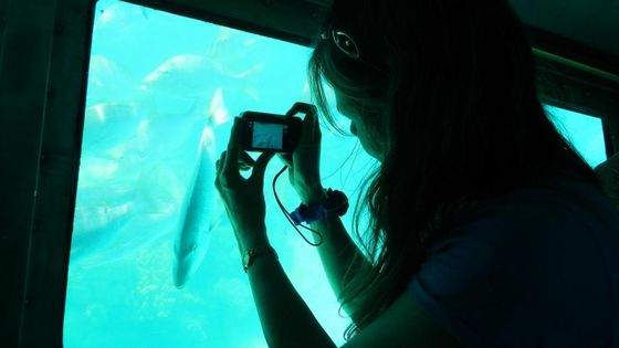 【到海底看珊瑚礁】墾丁後壁湖半潛艇體驗