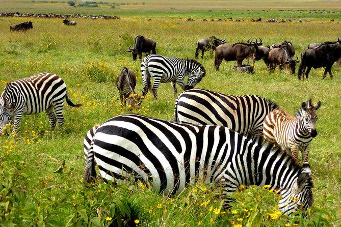10 Day Migration Safari