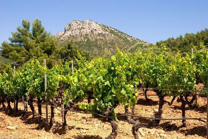 Aix en Provence & Cassis Private Day Tour Marseille Shore excursion