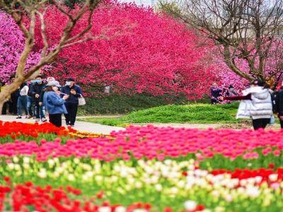 Oriental Beauty Park