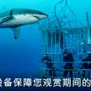 One Day Tour of North Shore Shark Adventures