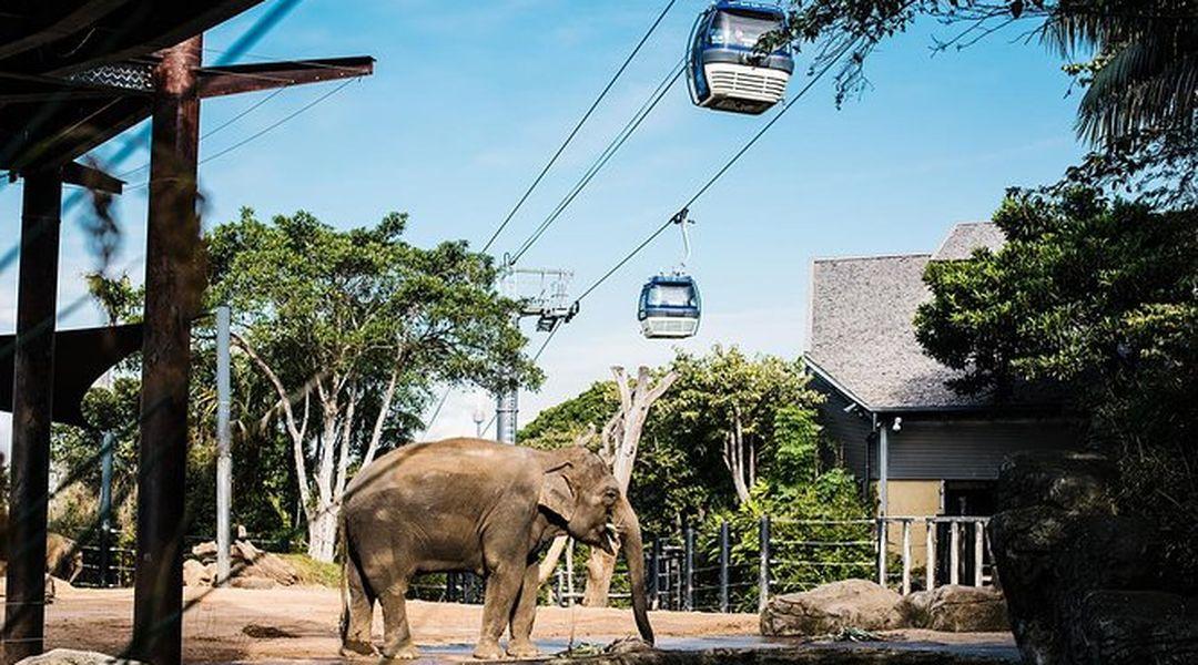 Image result for Taronga Zoo