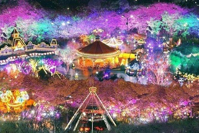 Daegu E-world Cherry Blossom Tour (Night Tour)