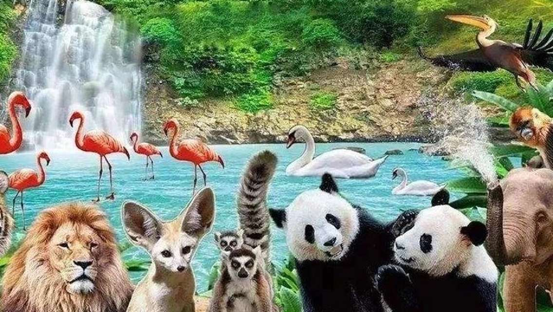Private Transfer between Shanghai City Center and Shanghai Wild Animal Park