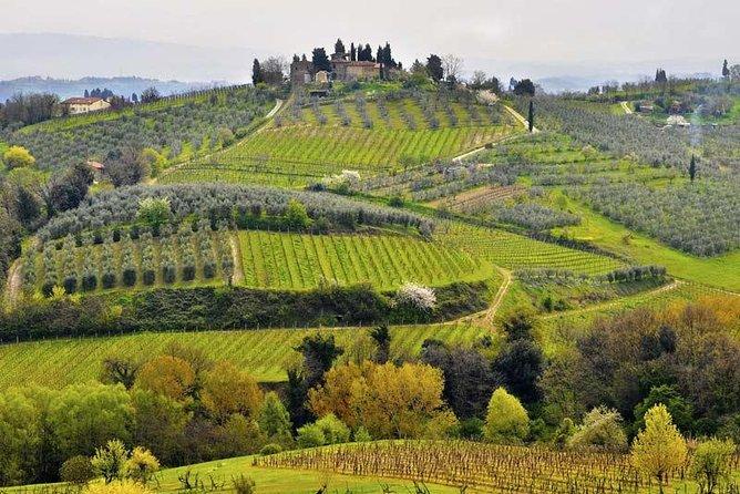 Escorted Tour Tastes of Tuscany: Pisa, Siena, San Gimignano and Chianti