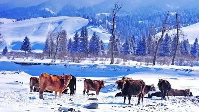 新疆那拉提旅遊風景區一日遊