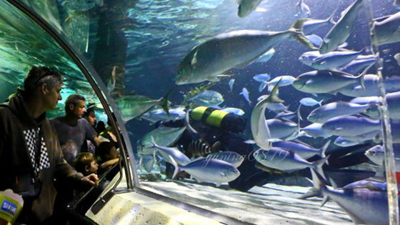 Sea life Kelly Tarlton's Aquarium